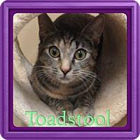 Adopt A Pet :: Toadstool - Newnan, GA