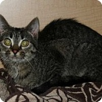 Adopt A Pet :: Peony - McHenry, IL