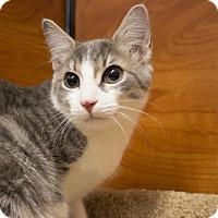Adopt A Pet :: Sage - Savannah, GA