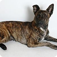 Adopt A Pet :: Marvin - Redding, CA