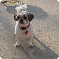 Adopt A Pet :: Butters - mooresville, IN