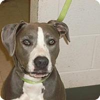 Adopt A Pet :: Kyra - Gulfport, MS