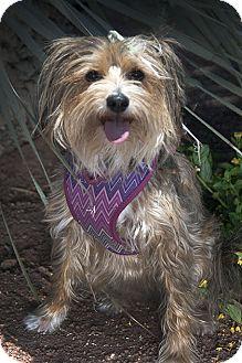 ADRIANA LIMA | Adopted Dog | Beverly Hills, CA | Lhasa ...