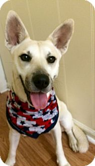 German Shepherd Dog/Labrador Retriever Mix Dog for adoption in Shaw AFB, South Carolina - Tulip