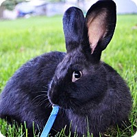 Adopt A Pet :: Colton - Bruce Township, MI