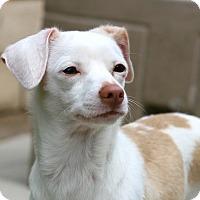 Adopt A Pet :: Pearl - Coronado, CA