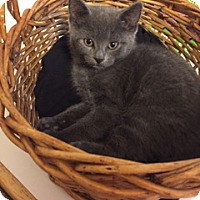 Adopt A Pet :: Anthony - Whitehall, PA