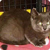 Adopt A Pet :: Sarah - Putnam, CT
