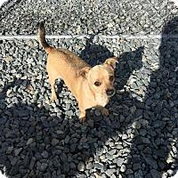 Adopt A Pet :: Jakey - Thomasville, NC