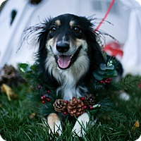 Adopt A Pet :: Oscar - Auburn, CA