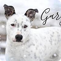 Adopt A Pet :: Gary - Joliet, IL