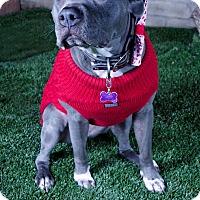 Adopt A Pet :: Jasmine - Redondo Beach, CA