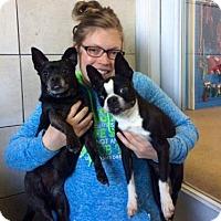 Adopt A Pet :: Maizie Moop - Mission, KS