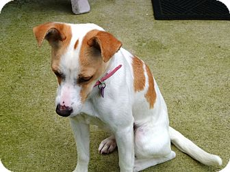 Terrier (Unknown Type, Small) Mix Dog for adoption in Gig Harbor, Washington - Myah