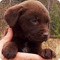 Adopt A Pet :: Lee - Pawling, NY