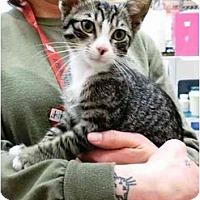 Adopt A Pet :: Oscar - Irvine, CA