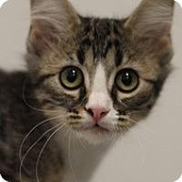 Adopt A Pet :: Ho-Ho - Sacramento, CA