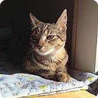 Adopt A Pet :: Trixie - Island Park, NY