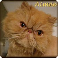 Adopt A Pet :: Aimee - Beverly Hills, CA