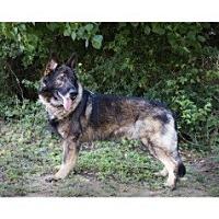 Adopt A Pet :: Smokey - Adoption Pending - Houston, TX