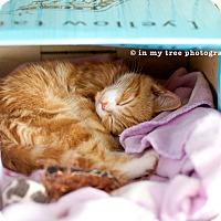 Adopt A Pet :: Shiela - Island Park, NY
