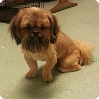 Adopt A Pet :: Jester - Brattleboro, VT