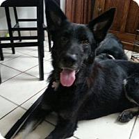 Adopt A Pet :: Ernie - Morrisville, NC