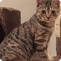 Adopt A Pet :: Francine - East Hanover, NJ