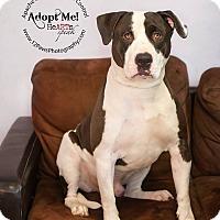 Adopt A Pet :: Finn - Apache Junction, AZ