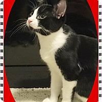 Adopt A Pet :: Aflac - Mt. Prospect, IL