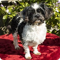 Adopt A Pet :: Nelson-N-Video - Alvin, TX