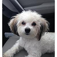 Adopt A Pet :: Daisy - Long Beach, NY