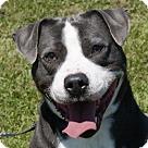 Adopt A Pet :: Spike - Adoption Pending