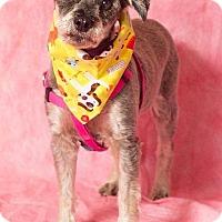 Adopt A Pet :: Iris - Gilbert, AZ
