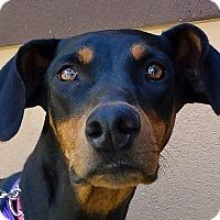 Adopt A Pet :: Marina - Las Vegas, NV