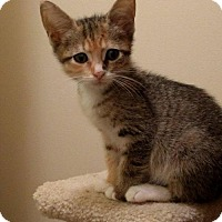 Adopt A Pet :: .Lucy - Baltimore, MD