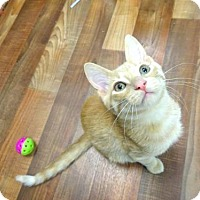 Adopt A Pet :: Mitch - Woodland Hills, CA
