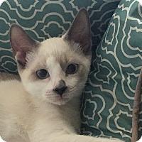 Adopt A Pet :: Tank (with Hank) - Fairfax, VA