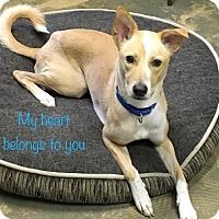 Adopt A Pet :: Maxx - Alexandria, VA