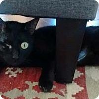 Adopt A Pet :: Celeste - Merrifield, VA