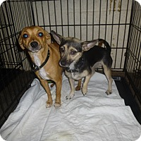 Adopt A Pet :: Shania aka Shadow - Glastonbury, CT