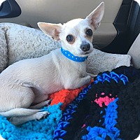 Adopt A Pet :: Freddy - Las Vegas, NV