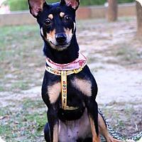 Adopt A Pet :: Bebe - Castro Valley, CA