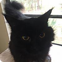 Adopt A Pet :: Max - Port Charlotte, FL