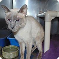 Adopt A Pet :: Sauvignon - THORNHILL, ON