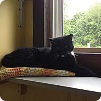 Adopt A Pet :: River - Lancaster, MA