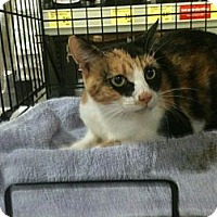 Adopt A Pet :: Truffles - Cocoa, FL