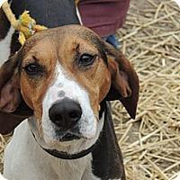 Adopt A Pet :: Lucy Lou - Brattleboro, VT