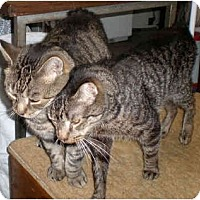 Adopt A Pet :: Elvis & Sammy(DM) - Little Falls, NJ