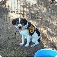 Adopt A Pet :: Will - Albany, NY